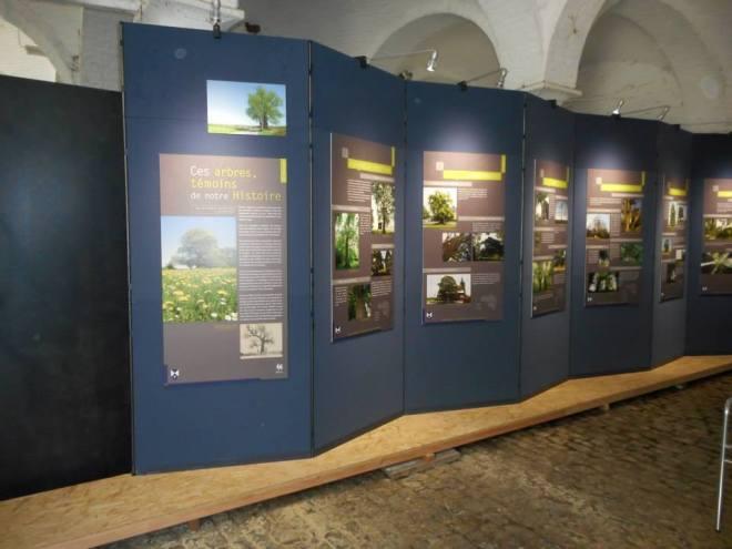 """L'Exposition """"Ces arbres témoins de notre Histoire"""". Photo Luc Jandrain"""
