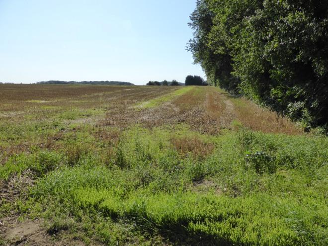Vue du Vieux Chemin de Louvain, au centre de la photo et en regardant vers le sud, actuellement un champ agricole. Photo auteur