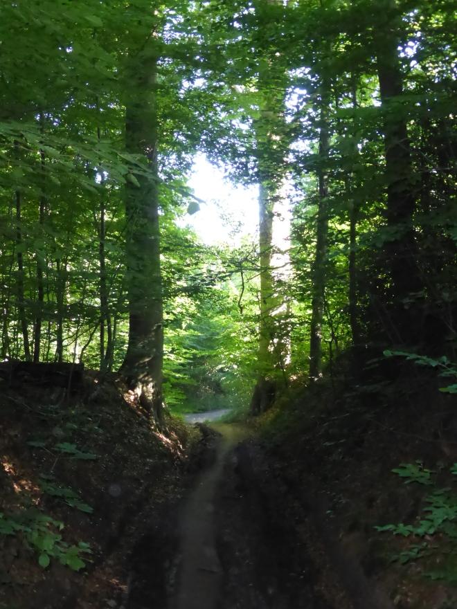 Le Vieux Chemin de Louvain, arrivant à la Première Drève dans la forêt. Photo auteur